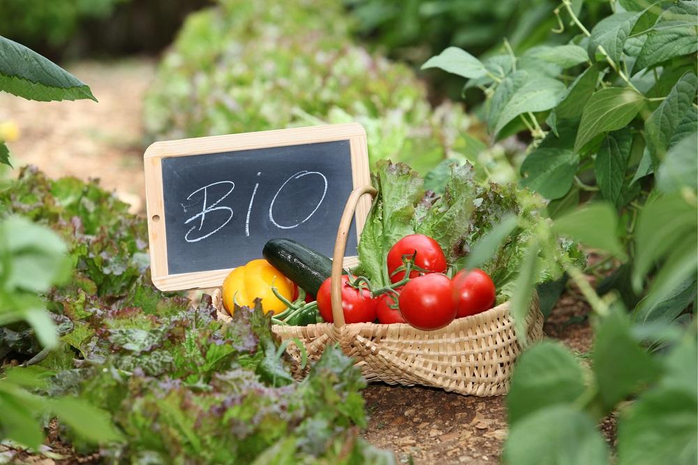 Cum va arăta piața BIO în 2021: Prețuri mai mici și mai multe produse ecologice