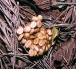 Cele mai scumpe arome fierbinti in luxoasele 'incaperi ale cafelei'