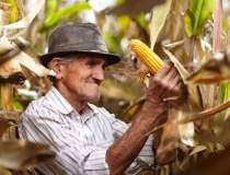Agricultura cu fermieri de...