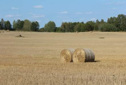 Problema in agricultura: pretul graului a scazut sub 600 de lei tona, iar al porumbului - sub 700 de lei