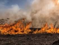 Incendiu in Delta Dunarii: au...