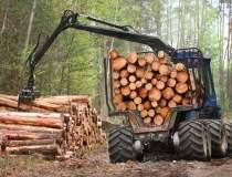 Exploatarea lemnului, afacere...