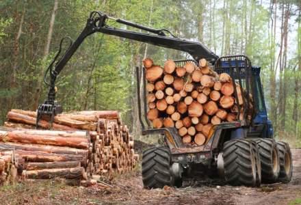 Exploatarea lemnului, afacere de 1,7 miliarde de euro pe an in Romania