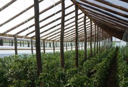Cum sa deschizi o ferma de legume bio: de ce ai nevoie ca sa incepi afacerea