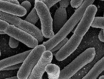 Epidemia de E.coli, cea mai...