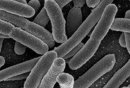 Despagubiri de 1,5 mil. euro pentru legumele nevandute din cauza E.coli