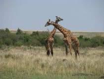 Kenya: Cum poti experimenta...