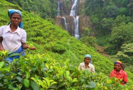 Turist in Sri Lanka: cum am vazut cu 3.415 lei o tara exotica in care savurezi fara sa vrei haosul drumului si calmul peisajelor