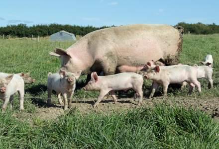 Guvernul a avizat favorabil proiectul de lege care ar putea ajuta si ferma de porci detinuta de fiul lui Liviu Dragnea