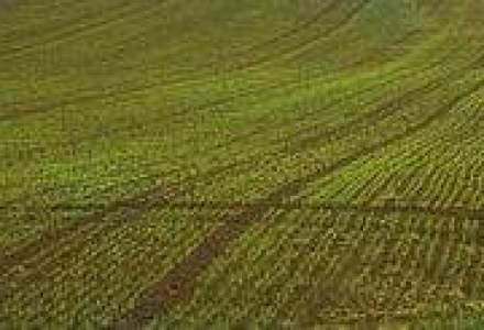 Chinezii vor sa investeasca in legumele romanesti