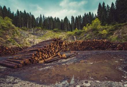Platforma Romania 100: Guvernul PSD-ALDE opreste accesul cetatenilor la aplicatiile de urmarire a taierilor de masa lemnoasa