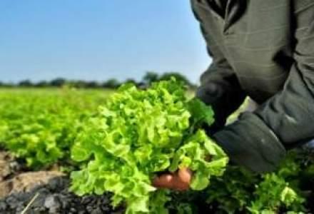Un business in care tonul il da si vremea, nu doar vremurile: Starea afacerilor din agricultura