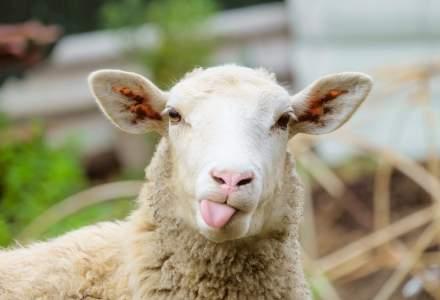 "Ministrul Agriculturii, Petre Daea, lanseaza campania ""Alege Oaia"""