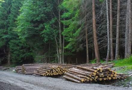 Romsilva vrea sa recupereze in instanta 400.000 de hectare de padure; statul a pierdut jumatate din fondul forestier, in 25 de ani