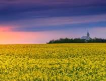 Un an bun pentru agricultura:...