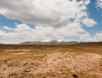 Peste 1.000 de hectare de...