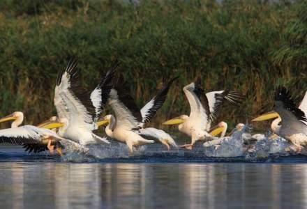 Delta Dunarii sau cum un paradis natural s-a transformat intr-un cosmar real pentru proprietarii de pensiuni