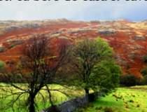 Anglia rurala: povesti cu...