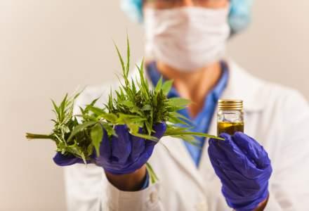 Portugalia a legalizat utilizarea canabisului in scopuri medicale, dar nu si cultivarea proprie