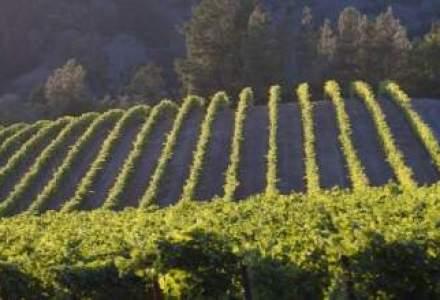 Lerida International aduce in Romania vinurile californiene Kendall-Jackson
