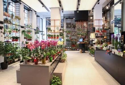 Magnolia se extinde la Timisoara: ce strategii are liderul pietei de flori