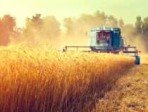 Bursa cerealelor: cum au...