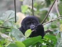 Vacanta in Uganda, locul unde...