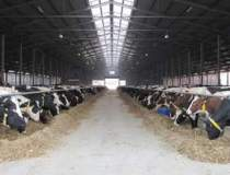 Productia de lactate, in...