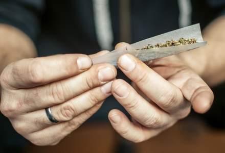 Trei barbati, arestati pentru trafic de droguri; au fost indisponibilizate peste 50 kg de cannabis
