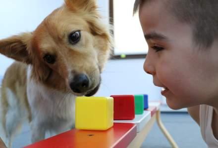 Din maidanezi in caini de terapie. Cum a schimbat o asociatie evolutia unor copii?