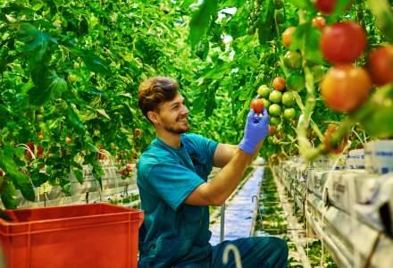 5 afaceri profitabile in domeniul agriculturii pe care le poti incepe cu investitii mici