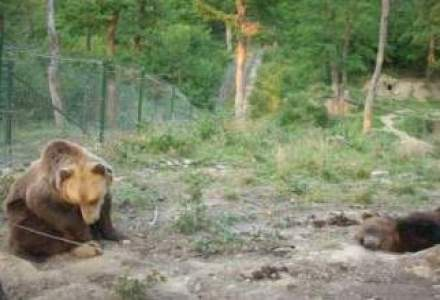 Britanicii au investit 280.000 euro in Rezervatia de ursi de la Zarnesti