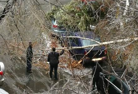 EXCLUSIV: Cati copaci au fost taiati in Bucuresti si cat costa operatiunile