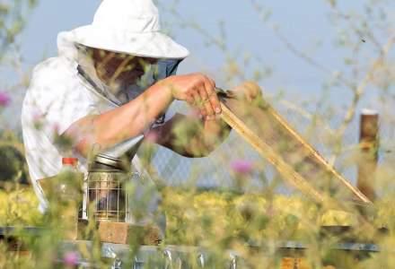 Idei de afaceri mici si profitabile: sfaturi de la un antreprenor apicultor cu experienta