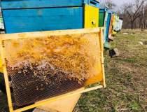 Bee Farming,...