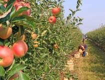 Paradox: Agricultura e...