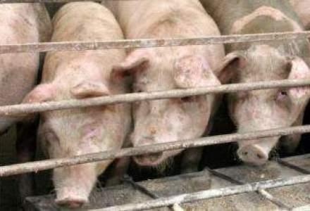 Consumul de carne de porc va scadea cu 15-29% in perioada Craciunului