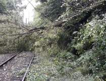 Circulatia feroviara a fost...