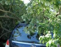 Un copac a cazut peste opt...