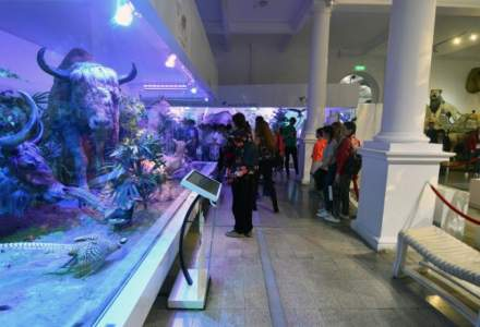 Tehnologie anticutremur de ultima generatie, instalata la Muzeul Antipa