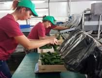 REPORTAJ: Fermierul care a...