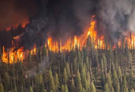 Focuri masive, fara precedent: Cum afecteaza intreaga planeta