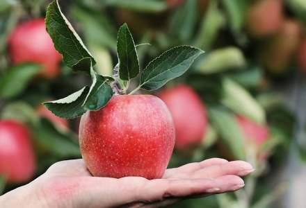 """Cum """"arata"""" productia de fructe a Romaniei: suprafete cultivate in scadere, """"inflorim"""" doar cu prune si mere"""