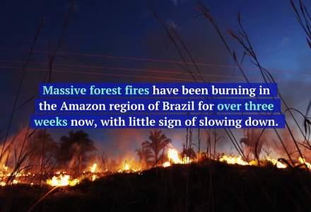 """Arde """"plamanul planetei"""": Record de incendii in Amazon"""