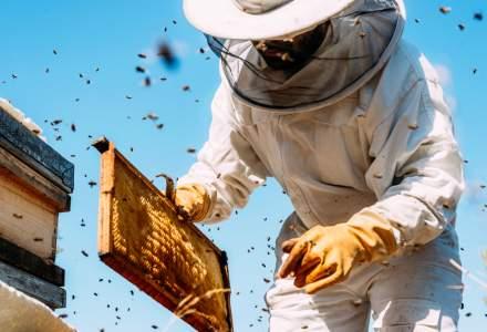 Romanul care ajuta apicultorii din intreaga lume: Suntem prima linie de aparare a albinelor