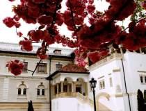 FOTO Palatul Cotroceni: Cum...