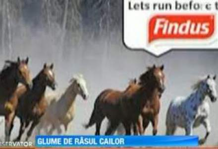 "Glume pe seama carnii de cal: 2 cai ascunsi in lasagna-""aici nu au cum sa ne gaseasca"""