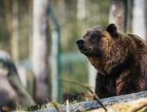 Ursul, inclus pe lista...