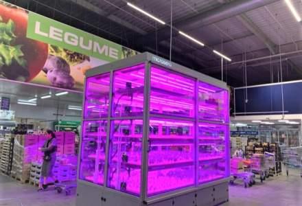 Metro aduce in magazinul din Baneasa o microsera unde vor creste plante aromatice, care vor ajunge direct la raft