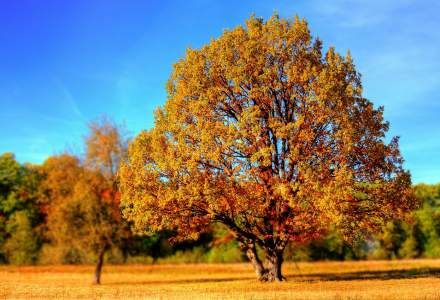 Octombrie 2019, cea mai calda luna octombrie inregistrata vreodata in lume